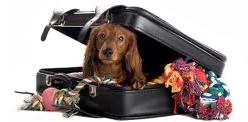 dog-traveling